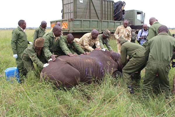How routine rhino trip left nine dead, and world stunned