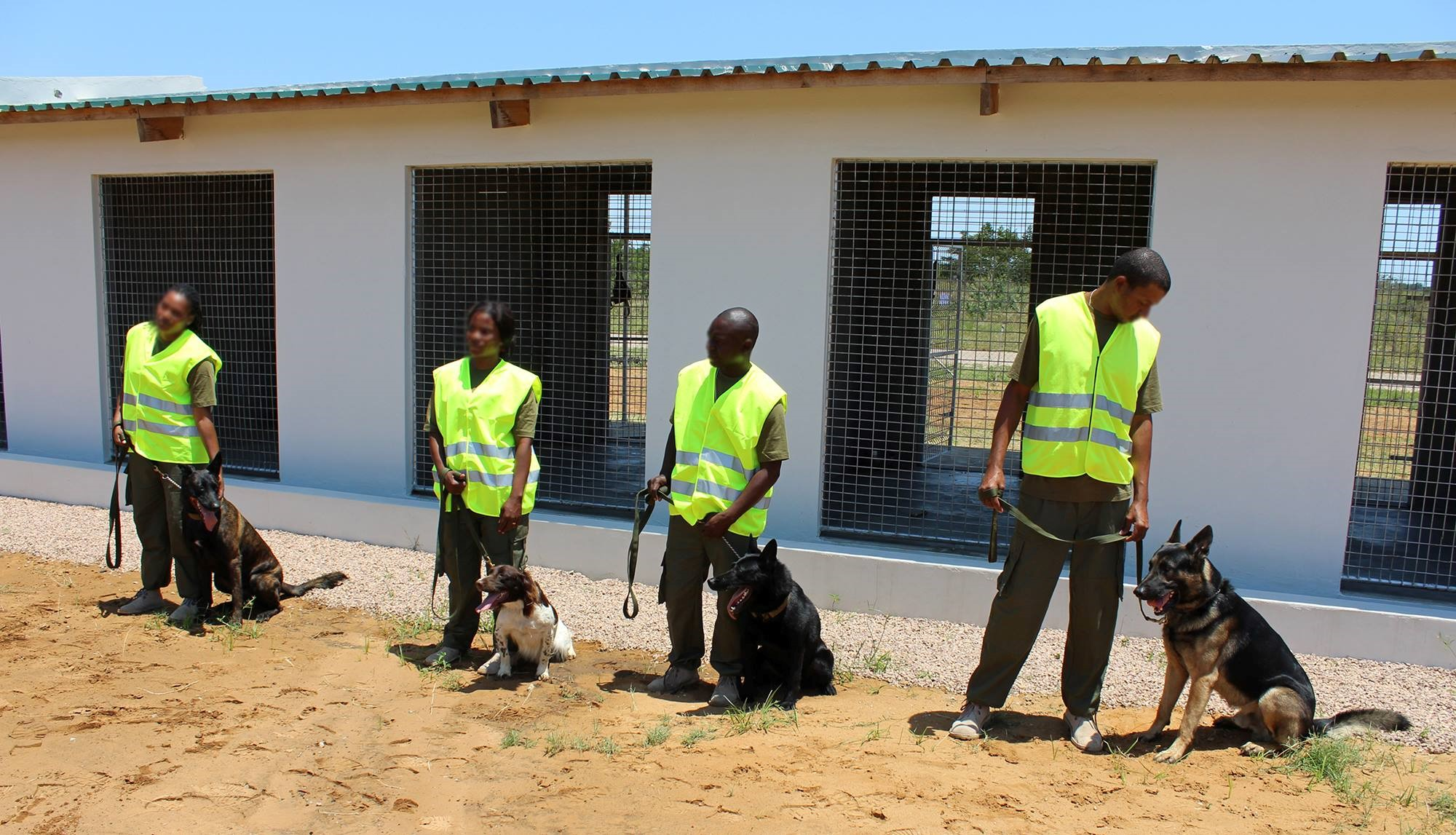 Dogs help in the fight against poaching