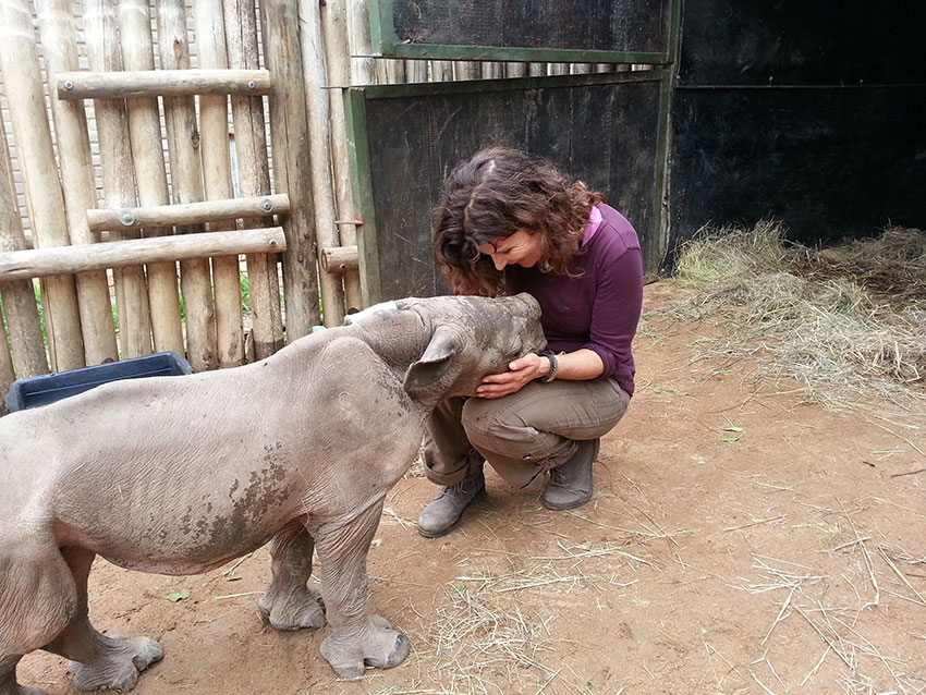 The Rhino in 2015: Poaching Statistics