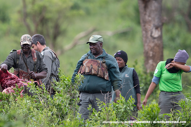 Coming Face to Face With the Rhino Poaching Crisis