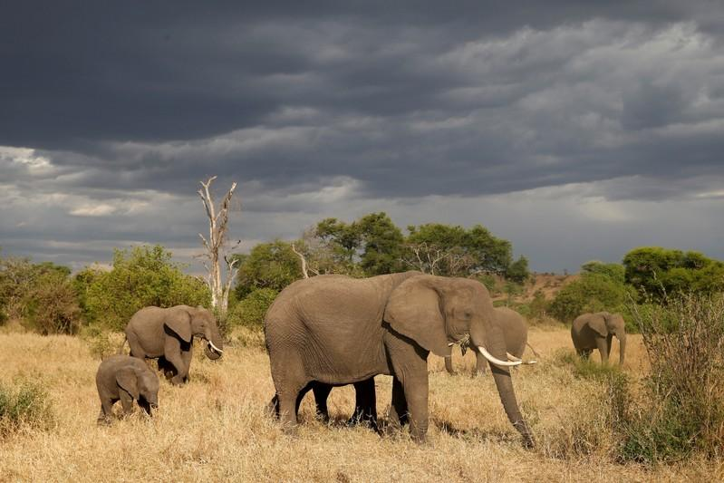 Elephant and Rhino Populations Skyrocket in Tanzania Thanks to Anti-Poaching Task Force