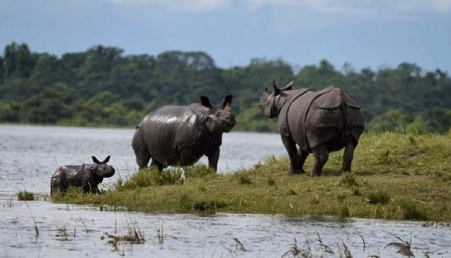 Special Force To Be Appointed For Rhino Protection