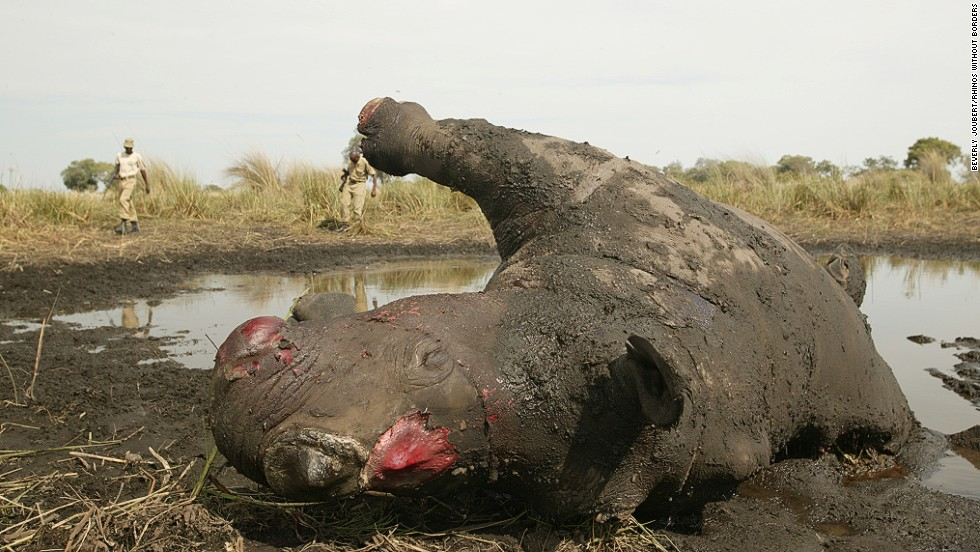Botswana: Poachers Hit Mombo, Kill 3 Rhinos
